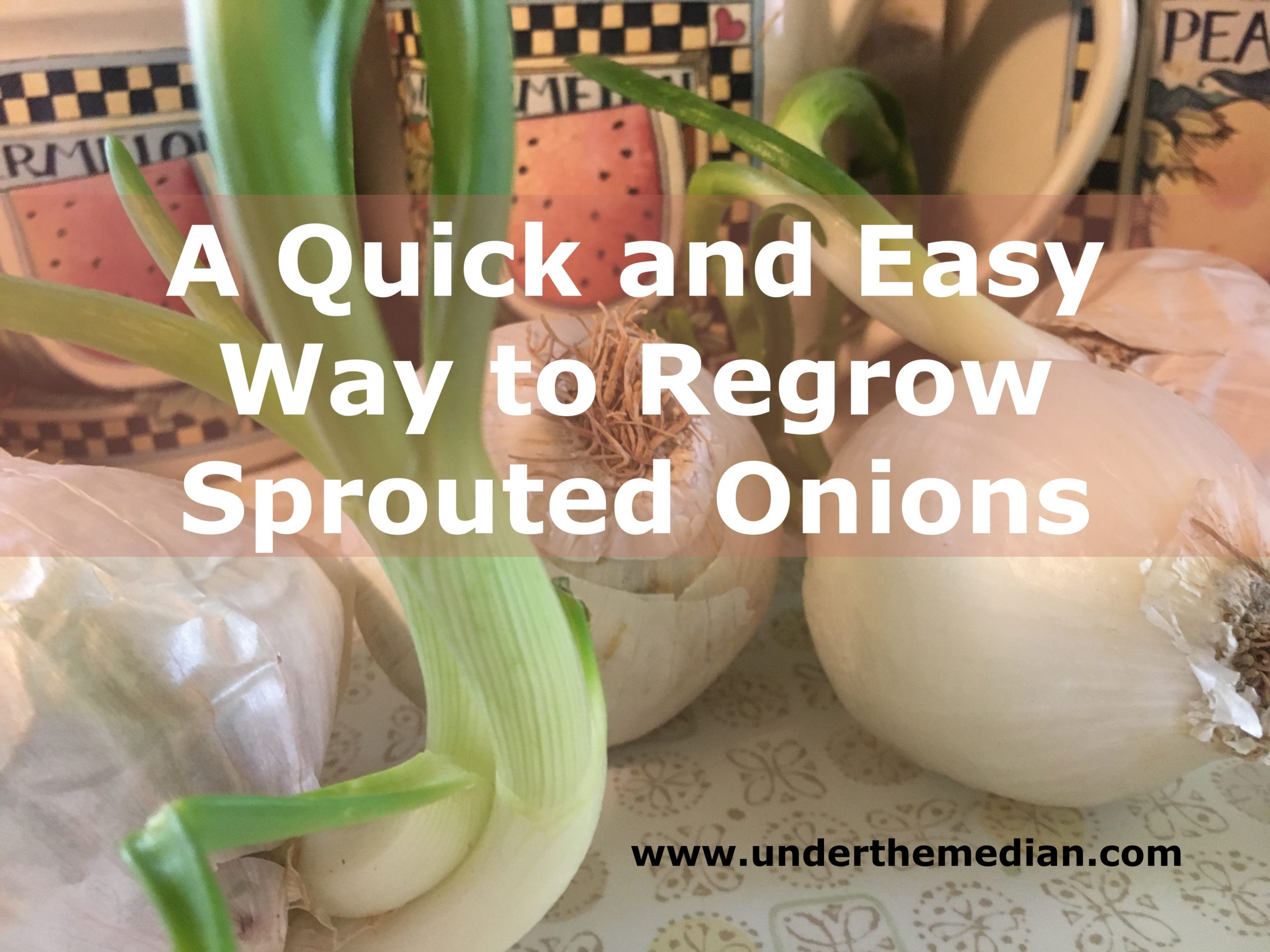 A Quick and Easy Way to Regrow Sprouted Onions