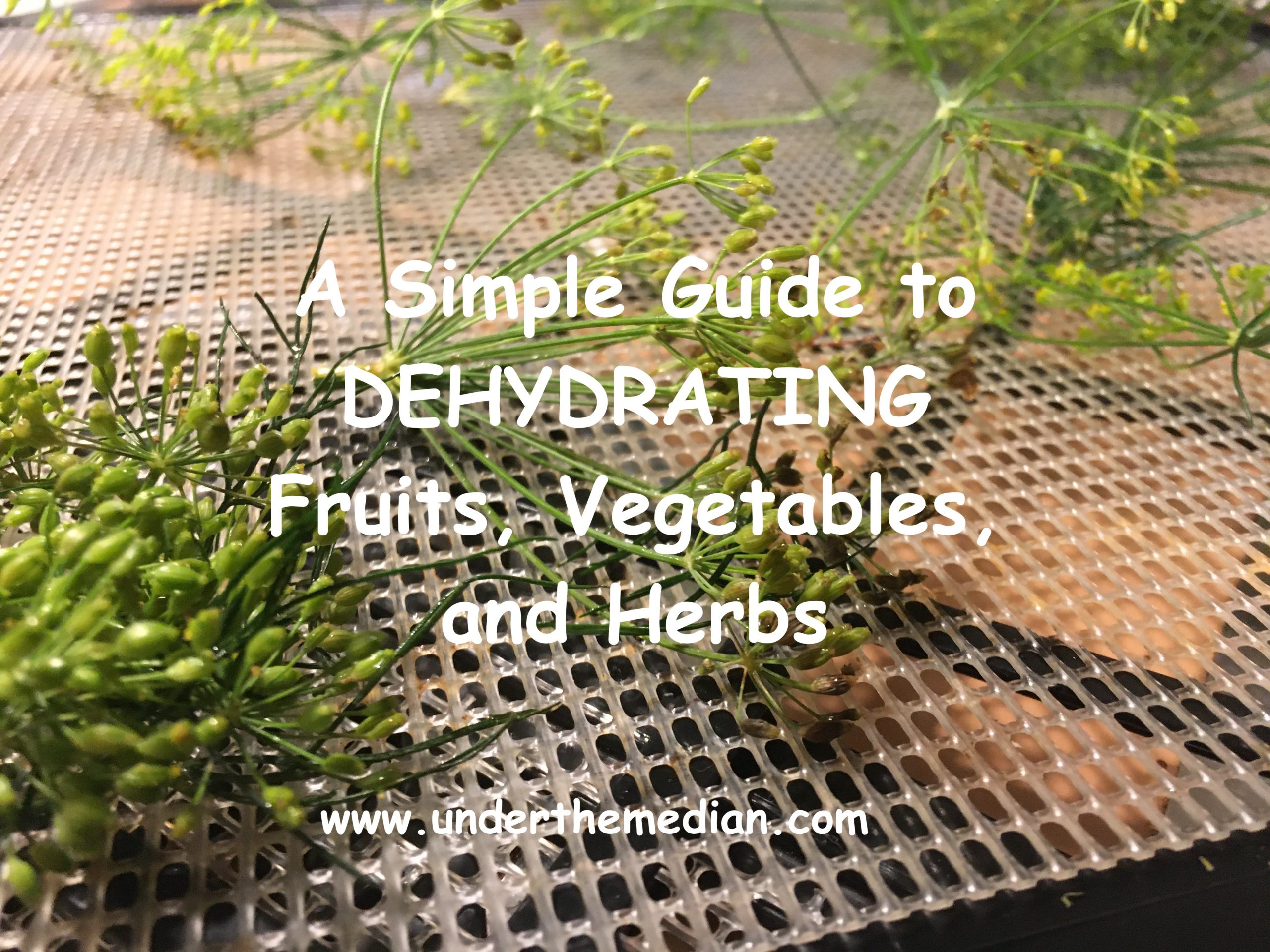 Save Money when You Dehydrate Herbs and Vegetables for Winter